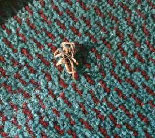 Travelers Inn & Suites: Bug on a Rug