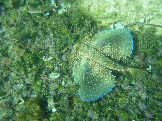 Hotel Marina Skorpios: Fische findet man beim Tauchen viele