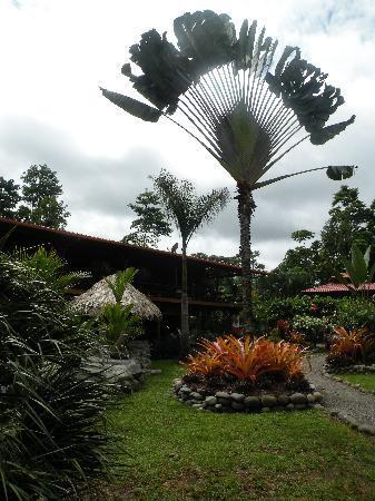 Hotel Banana Azul : Pretty palm.