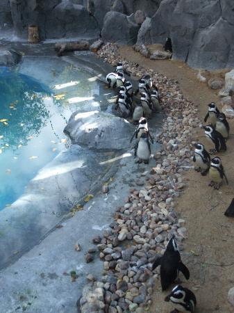 Zoo Aquarium de Madrid: animales