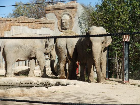 Zoo Aquarium de Madrid: animales 3