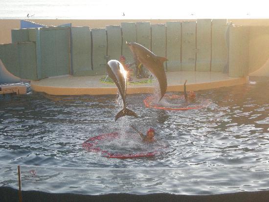 Enoshima Aquarium: イルカのショー