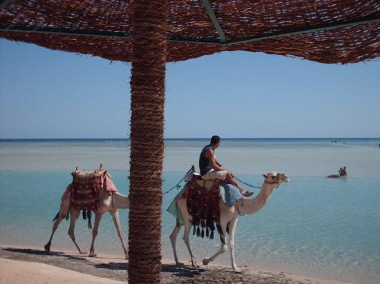 Blue Reef Red Sea Resort: all'ombra