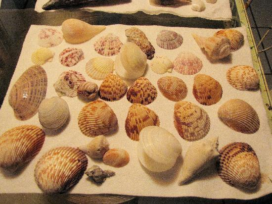 The PalmView: Shells