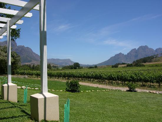 Lynx Wines: What a view....