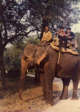 Bengala Occidental, India: Morning Elephant Ride