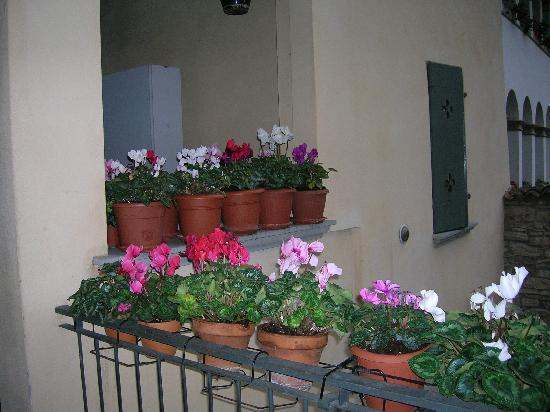Bed & Breakfast Agnese: Cyclamen outside front door