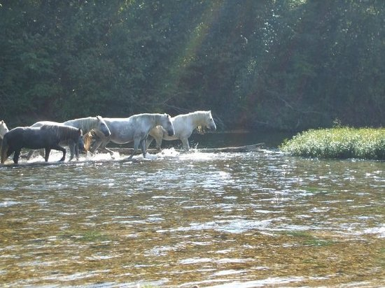 Current River State Park: Wild horses on Currant River, Mo. at Round Spring River Access