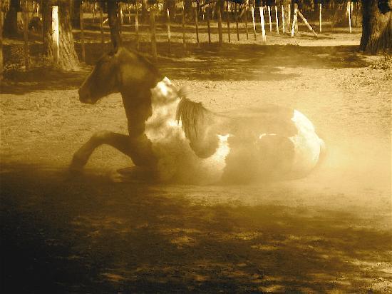 La Figura: Horses!