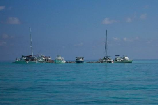 George Town, Grand Cayman: Stingray City-Grand Cayman