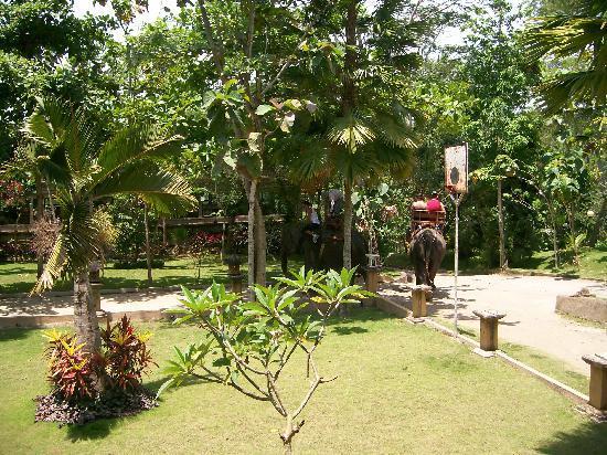 Besakih Beach Hotel: a visit to the elephant Park Bali