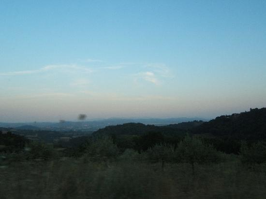 Boschi di Montecalvi: panorama