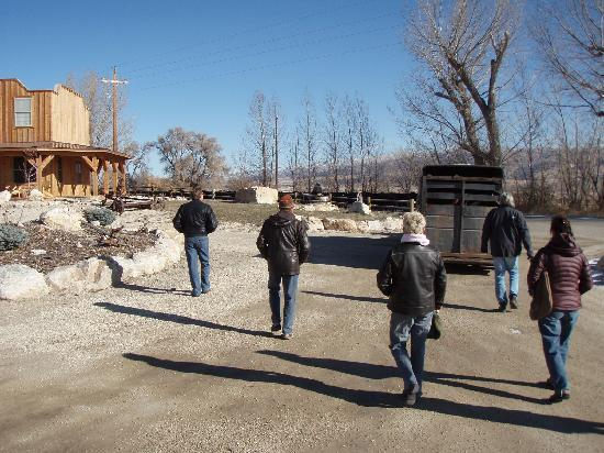 Almo Inn: cattle drive down highway