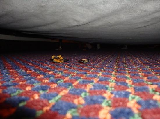 Days Inn Lubbock- Texas Tech University- 4th Street: Old pizza toppings on the floor and under the bed