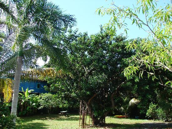 La Finca Vieques: The grounds are really gorgeous.....
