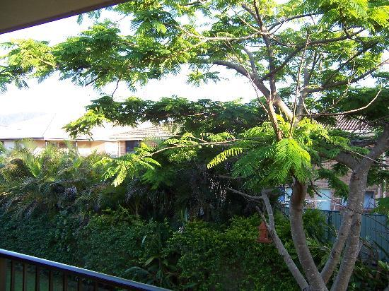 Coffs Harbour Holiday Apartments: View from our room