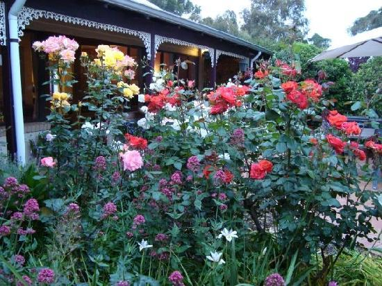 The Noble Grape Guest House: lovely blooming roses in the gardens to greet you every morning