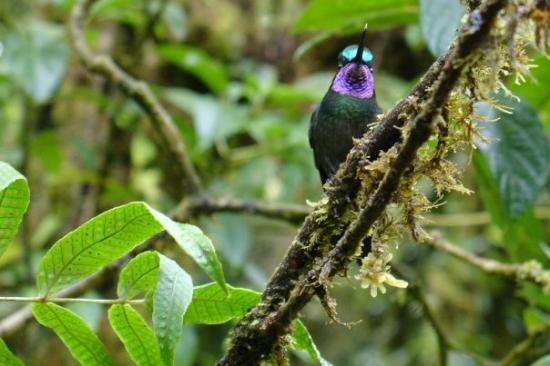 Santa Elena, Costa Rica: Een kolibri