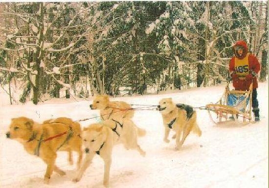 The Lake House: dog sled racing at the Lake Hous