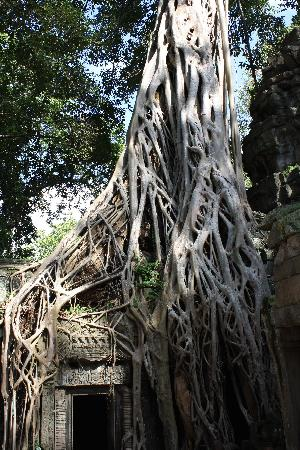 Happy Angkor Wat Tour: Jungle temple