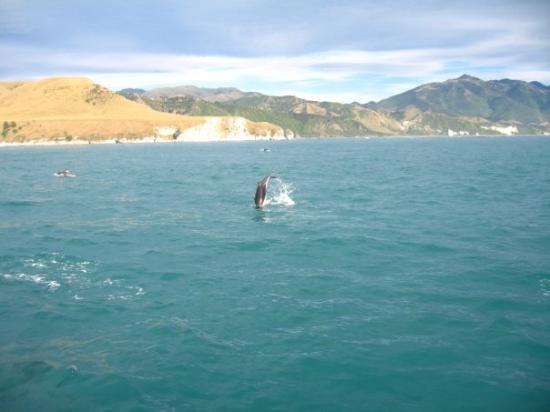 Dolphin Encounter ภาพถ่าย
