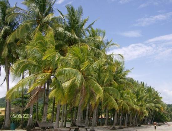 Samara Beach: mein schulweg II