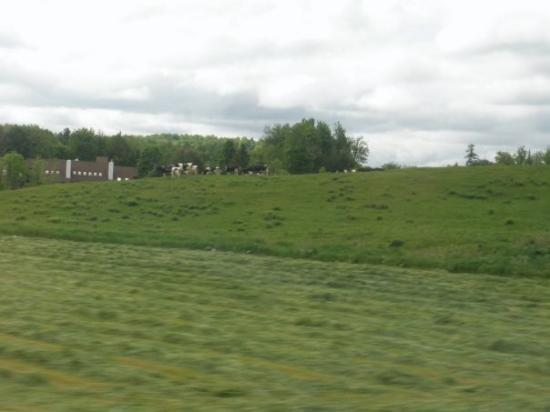 Waterbury, Βερμόντ: this was all that vermont consisted of. fields and cows.