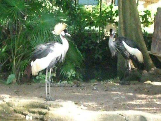Bali Bird Park: Great Birds!