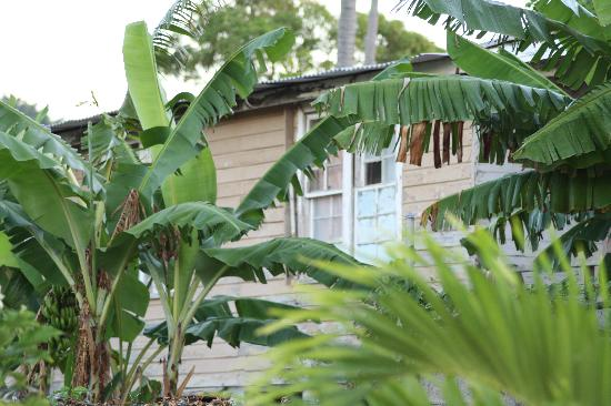 Morant Bay, Jamaika: Local Home behind hotel