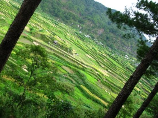 Some rice terrace on our way back to Sagada