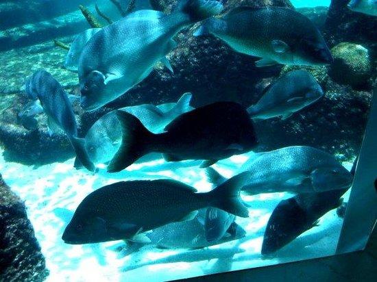 Atlantis Aquarium Bahamas It Was So Beautiful