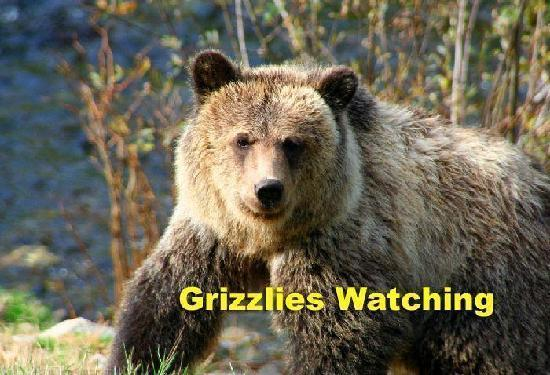Grizzly Bear Lodge & Safari: Grizzlies playing and fishing