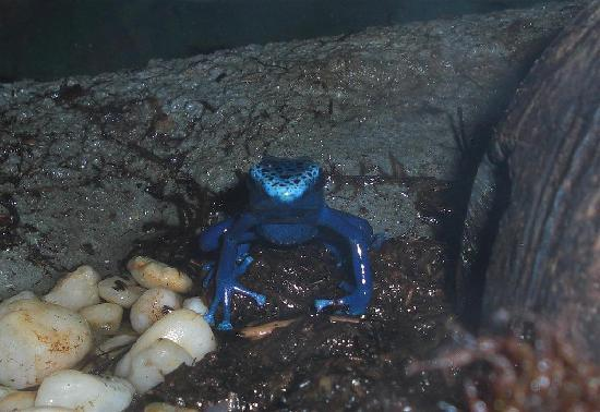 Reptilia Zoo and Education Centre: blue guy
