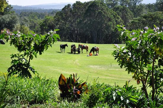 Fairmont Mount Kenya Safari Club: Our horses waiting on the lawn in front of our cottage