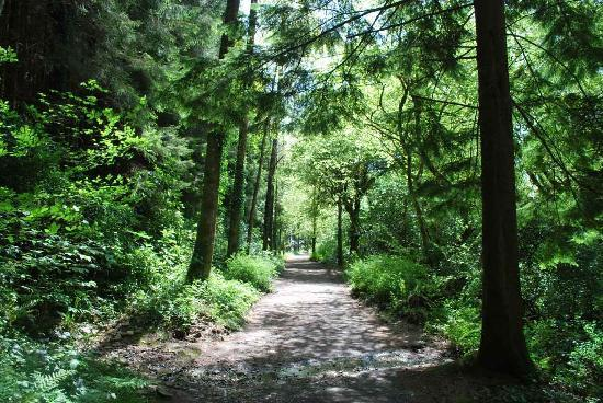 Ballyduff, Irlanda: Nearby forest walks