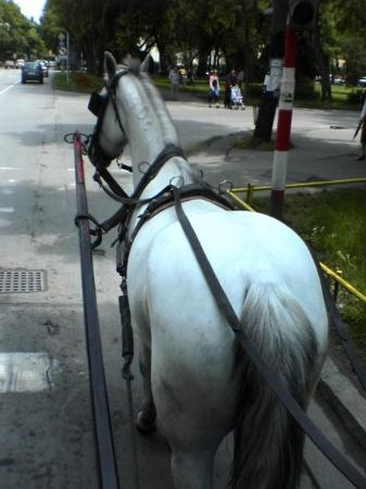 Sombor, Serbien: ...jedna vožnja fijakerom...