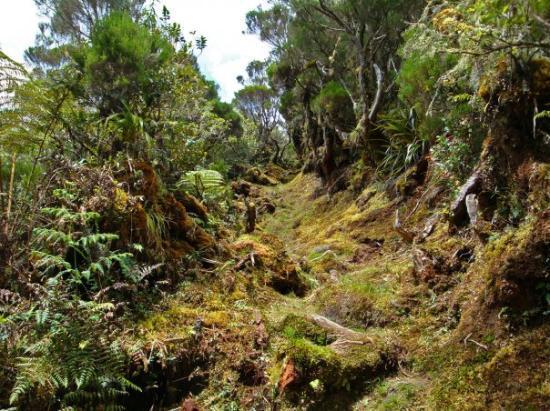 Sentier du Piton Marmite - Salazie (Le Bélier)