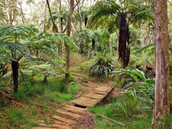 Salazie, เกาะเรอูนียง: Forêt de Bélouve - Sentier du Trou de Fer