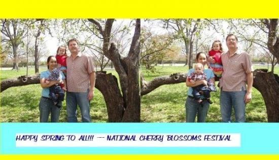 George Mason Memorial: Cherry Blossoms Festival