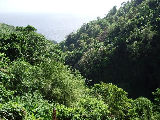 The Champs, Hotel, Restaurant & Bar: Dominica, the Nature Island of the Caribbean