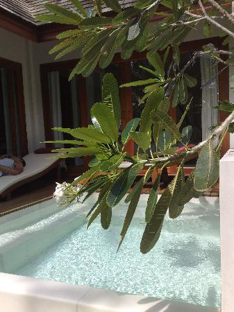 Zara Beach Resort: Grand Suite Plunge Pool