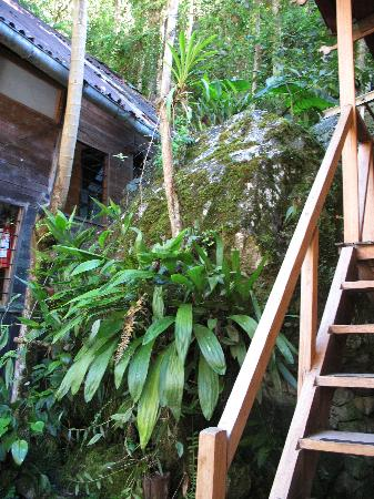 Rupa Wasi  Lodge: The entire lodge is built on and around the rock, making for a damp environment.