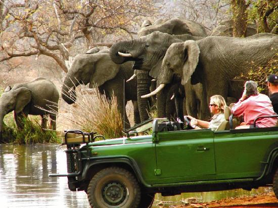 Mohlabetsi Safari Lodge: Safaris bring you close up to Africa's big game