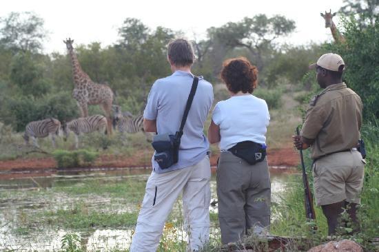 Mohlabetsi Safari Lodge: Bush walks, led by experienced Rangers, reveal the secrets of nature