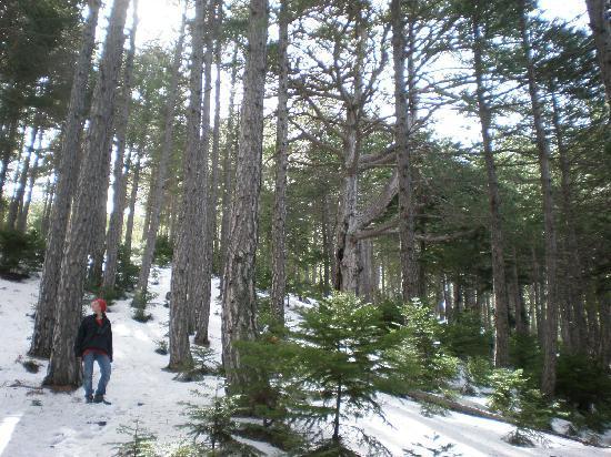 Ilaeira Mountain Resort : To the refuge