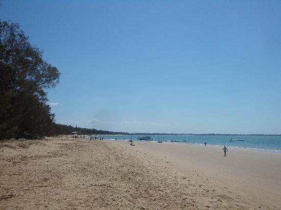 Arlia Sands Apartments: Hervey Bay, best beach of our holiday(equal to Mission Beach)