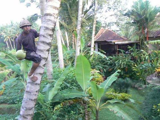 Villa Orchid Bali Φωτογραφία