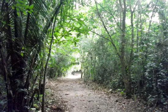 Jaguar Paw: The Jungle trail