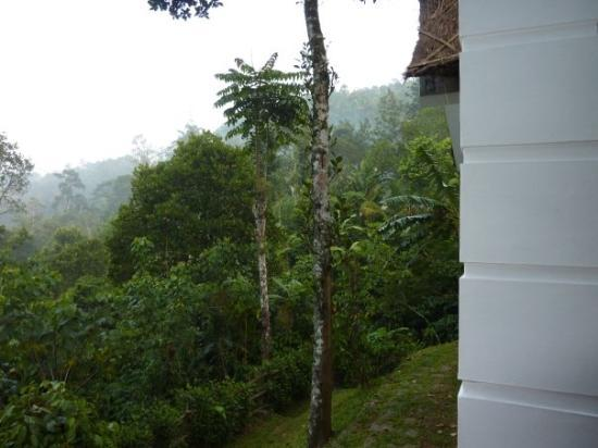 Niraamaya Retreats Cardamom Club - Thekkady: View from the porch of our room of the Cardamom Club in Kumily, at about 6am