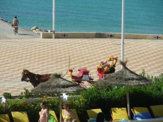 Nabeul, Tunisie : Mezzo di locomozione tunisino